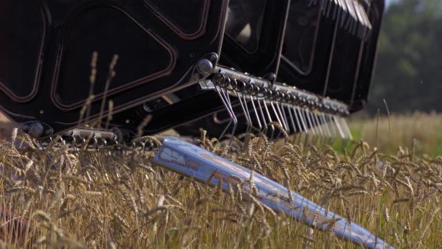 stockvideo's en b-roll-footage met slo mo cu combine harvesting wheat / amstetten, lower austria, austria - lower austria