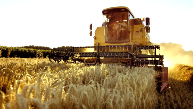 stockvideo's en b-roll-footage met combine harvesting wheat - oogsten