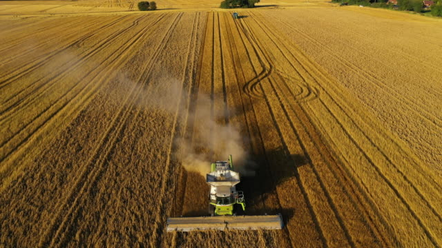 a combine harvests oats on august 23 2019 in hollingbourne england - farmer stock videos & royalty-free footage
