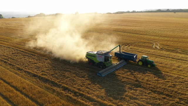 combine harvests oats on august 23, 2019 in hollingbourne, england. - crop stock videos & royalty-free footage