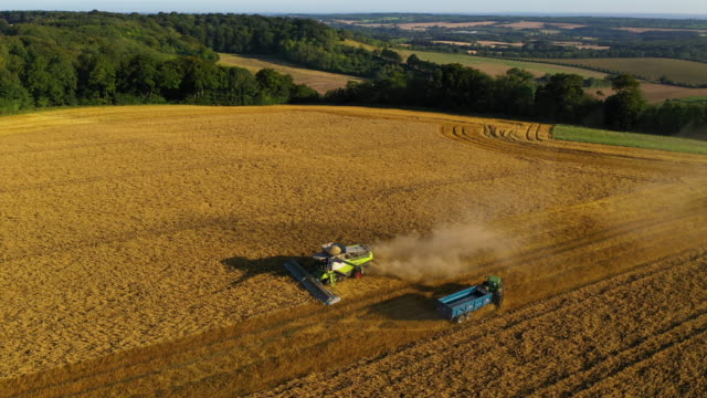 combine harvests oats on august 23, 2019 in hollingbourne, england. - macchinario video stock e b–roll