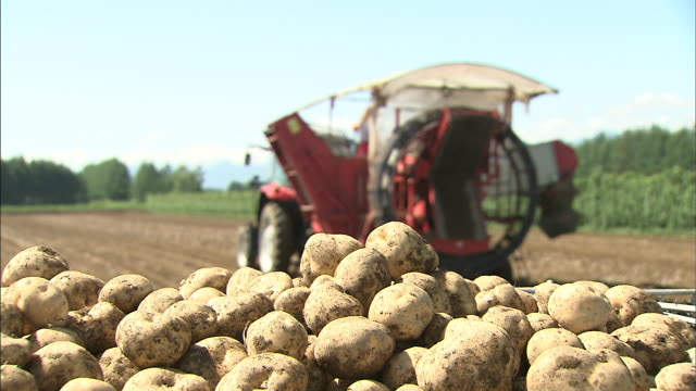 a combine harvests potatoes. - raw potato stock videos & royalty-free footage