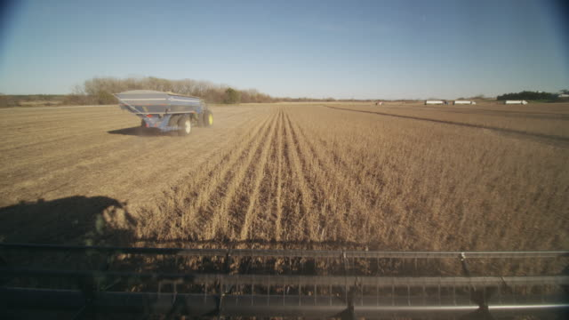 POV combine harvests soybeans in a large field; a tractor pulls away after receiving a download of grain.