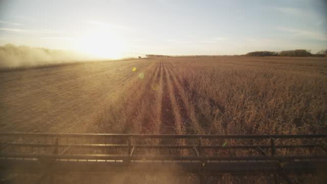 pov combine harvests soybeans in a large field; dust flies at camera in the setting sun. - soybean bildbanksvideor och videomaterial från bakom kulisserna