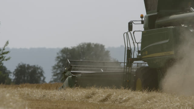 stockvideo's en b-roll-footage met combine harvests wheat (triticum aestivum) crop in field, somerset, england - cereal plant