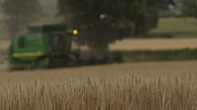 combine harvests wheat (triticum aestivum) crop in field, somerset, england - combine harvester stock videos and b-roll footage