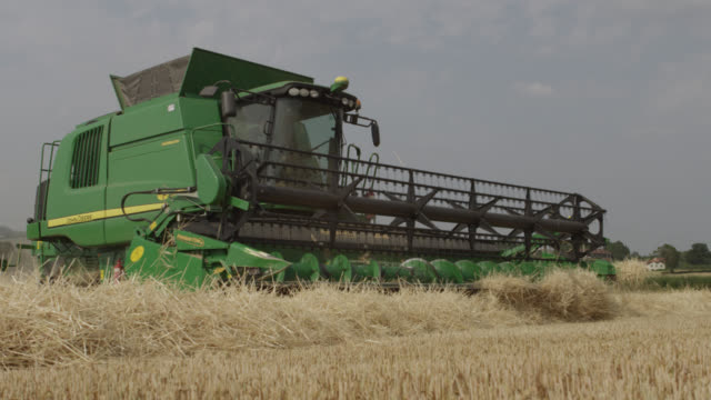 combine harvests wheat (triticum aestivum) crop in field, somerset, england - combine harvester stock videos & royalty-free footage