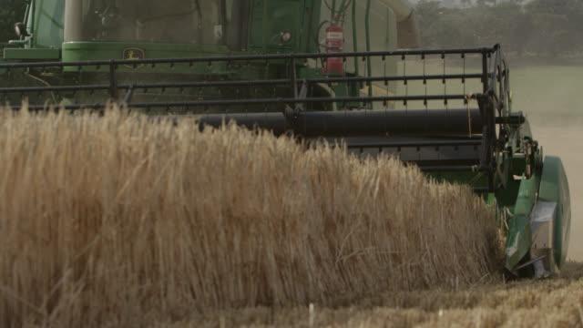 Combine harvests wheat (Triticum aestivum) crop in field, Somerset, England