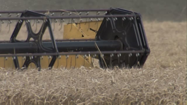 a combine havester cuts wheat in a field in lincolnshire, england. available in hd. - lincolnshire stock videos & royalty-free footage