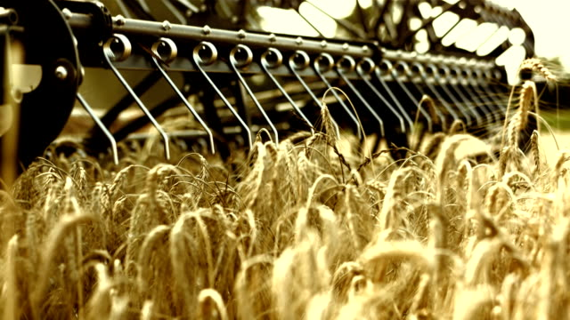 combine head cutting wheat - harvesting stock videos & royalty-free footage