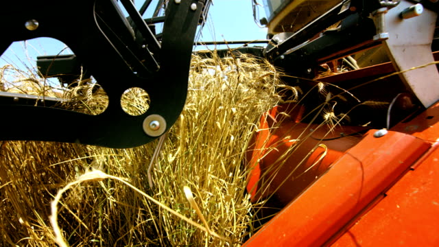 combine head cutting wheat - combine harvester stock videos & royalty-free footage