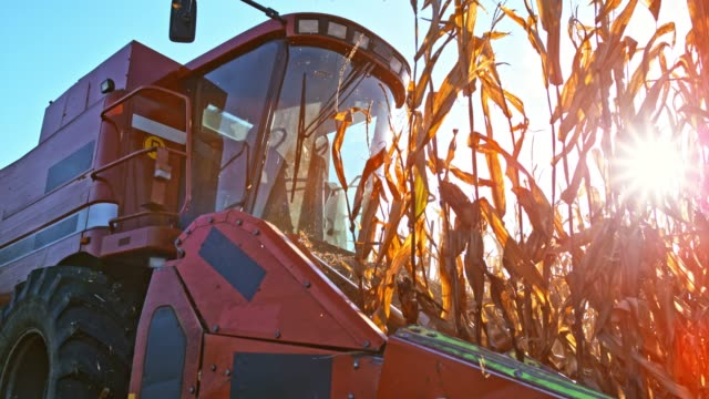 slo mo combine header cutting corn stalks in sunshine - agricultural equipment stock videos & royalty-free footage