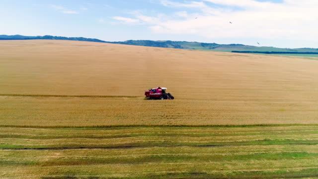 combine in the field cleans wheat. - 収穫する点の映像素材/bロール