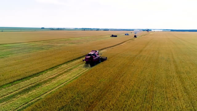 combine in the field cleans wheat. - panoramic stock videos & royalty-free footage