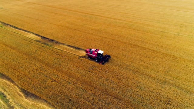 combine in the field cleans wheat. - wheat stock videos & royalty-free footage