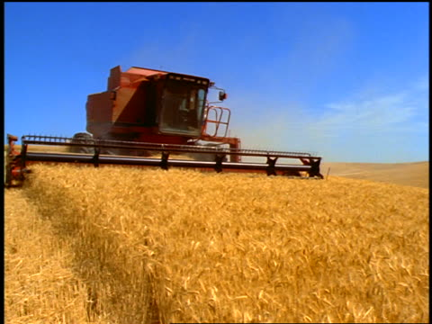 combine in wheat field coming past camera / eastern washington - combine harvester stock videos and b-roll footage
