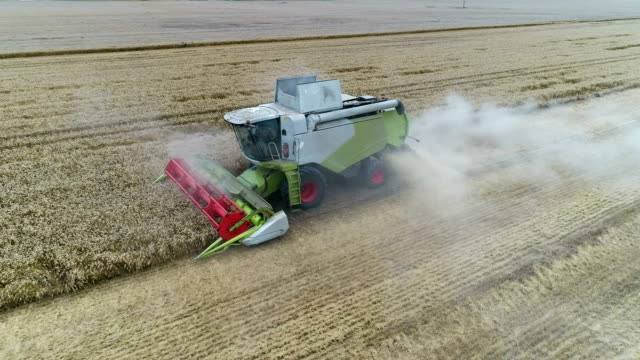 combine machine harvesting field - combine harvester stock videos & royalty-free footage