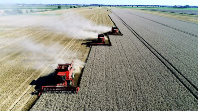combine machines harvesting field - agricultural equipment stock videos & royalty-free footage
