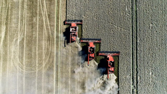 combine machines harvesting field - drone point of view stock videos & royalty-free footage