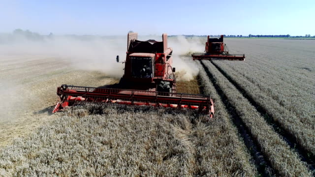 combine machines harvesting field - agricultural machinery stock videos & royalty-free footage