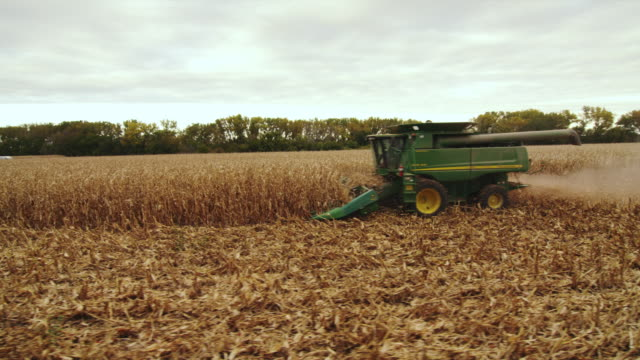 combine passes camera right to left, harvesting corn in large field. - combine harvester stock videos and b-roll footage
