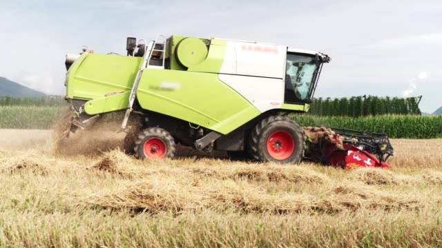 combine passing trough wheat field - biotechnology stock videos & royalty-free footage