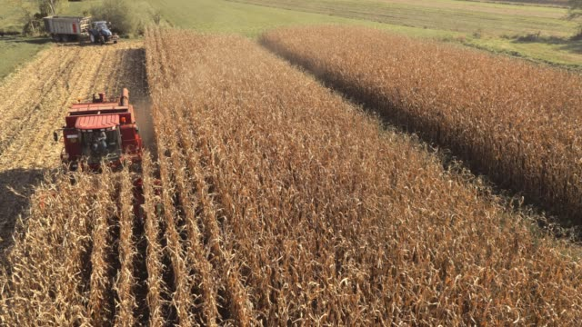 aerial combine reaping corn in sunshine - stubble stock videos & royalty-free footage