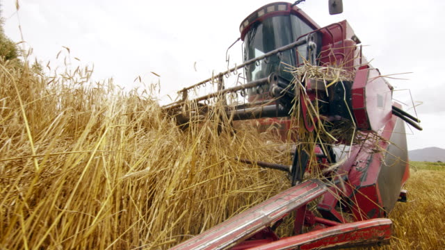 slo mo combine reel turning and cutter bar cutting the golden wheat grass - scythe stock videos and b-roll footage