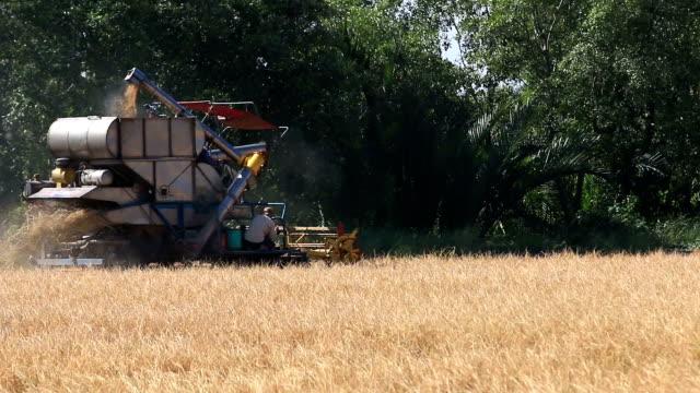 stockvideo's en b-roll-footage met combine tractor harvests - gepunt