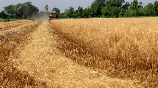 combine tractor harvests - spiked stock videos & royalty-free footage