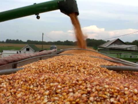 combine unloading corn into a truck - anno 2002 video stock e b–roll