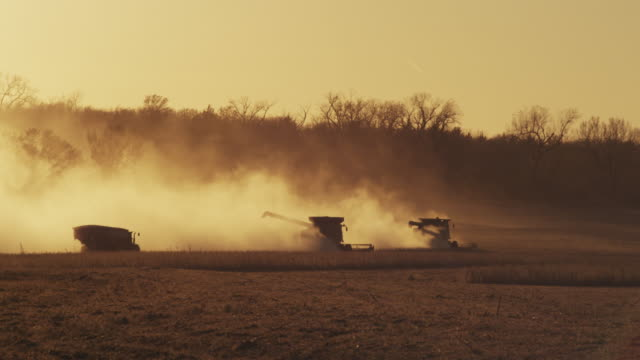 combines harvest soybeans in a dusty field at sunset. - 大豆点の映像素材/bロール