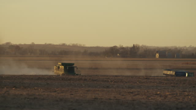 Combines harvest soybeans in a dusty field at sunset.