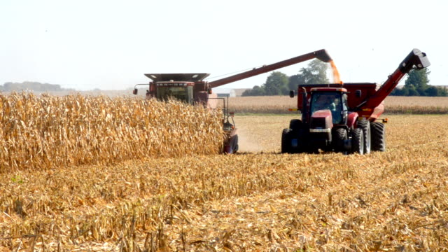 combining corn with grain cart, illinois - illinois stock videos and b-roll footage