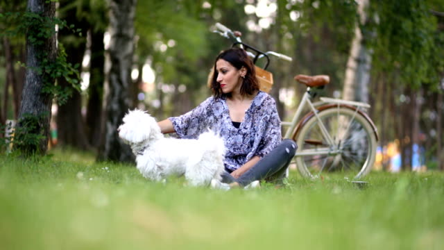 come dear, it's lunch time! - maltese dog stock videos and b-roll footage
