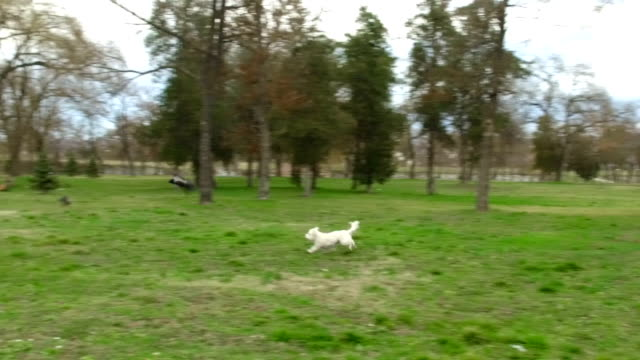 come over here bird! - maltese dog stock videos and b-roll footage