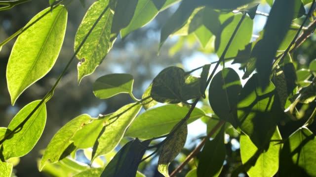 vídeos y material grabado en eventos de stock de sube a través de las hojas al amanecer - oficio agrícola