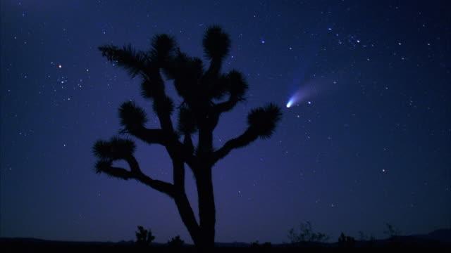 a comet streaks across the sky behind a joshua tree. - 彗星点の映像素材/bロール