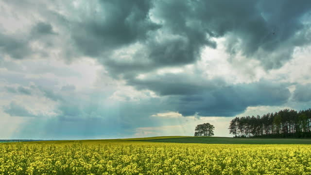 Coming storm - rape field - time lapse