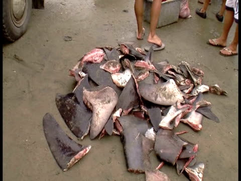 Commerce beat out conservation at a twoweeklong UN wildlife trade forum with Japan China and profisheries interests scoring a clean sweep in...