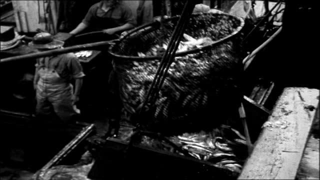 vídeos de stock e filmes b-roll de commercial fishing boat pulling into harbor area, sign for gilmore fish market in bg / middle-aged adult caucasian man throws rope to tie boat to... - captura de peixe