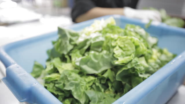 Commercial Kitchen Food Preparation - Cutting Lettuce