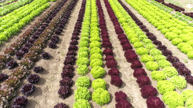 commercial vegetable garden flyover - vegetable garden stock videos and b-roll footage