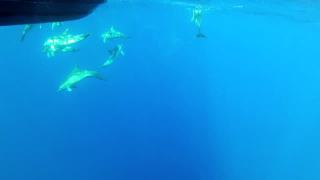 common dolphin - common dolphin stock videos & royalty-free footage