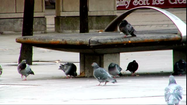 common feral rock pigeons walking in public plaza pigeons, one bird sitting on bench edge near backpack, lower torso of people walking fg, bg, other... - torso stock videos & royalty-free footage
