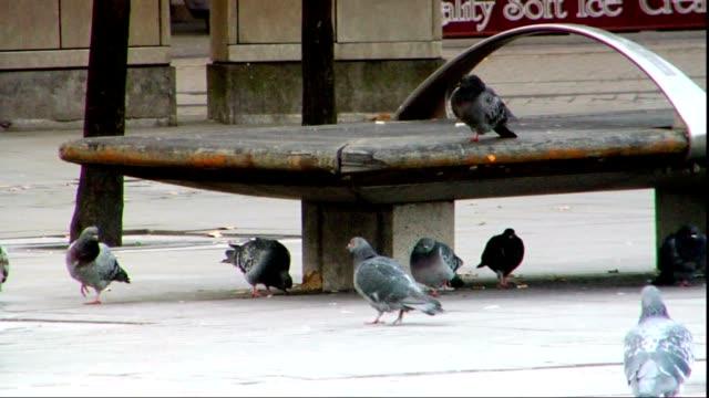 common feral rock pigeons walking in public plaza pigeons, one bird sitting on bench edge near backpack, lower torso of people walking fg, bg, other... - torso bildbanksvideor och videomaterial från bakom kulisserna
