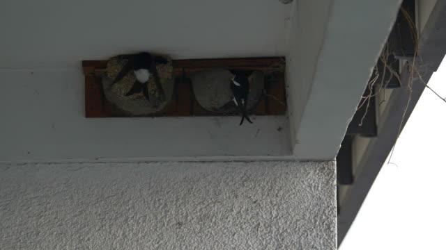 common house martin return to nest on city balcony - nest stock-videos und b-roll-filmmaterial