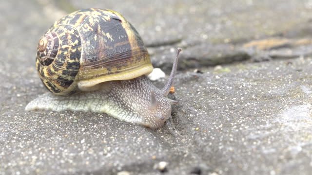 common snail in the ground - snail stock videos & royalty-free footage