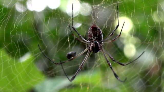 一般的なクモの巣にクモの巣の田園地帯 - 動物の色点の映像素材/bロール