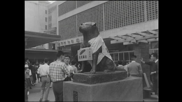 stockvideo's en b-roll-footage met community chest  donors take a feather from a collection box on the hachiko statue in tokyo as scouts solicit donations. - shibuya shibuya station